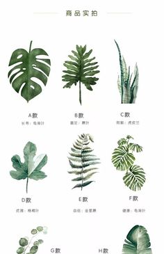 (disambiguation) Watercolor, Watercolors, Watercolour, or Watercolours may refer to: Watercolor Plants, Watercolor Leaves, Watercolor Art, Plant Illustration, Botanical Illustration, Flowers Draw, Plant Drawing, Leaf Art, Grafik Design