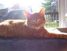 Sunny. My little red boy.