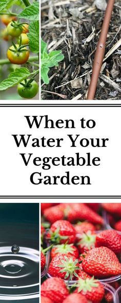 The questions every gardener has about watering are answered here: when to water, how long to water, how to water your garden while on vacation and more!