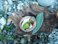 Zwergenbabybett aus Eicheln und Walnuss-Schale / Dwarf-baby's crib made of acorns and walnut shell