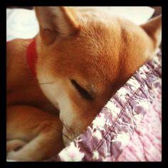 See? Sleeping.