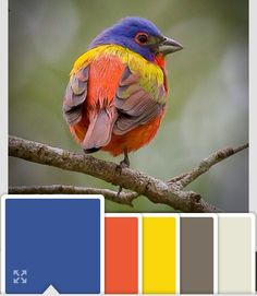Colors by Benjamin Moore. Color combination inspired by a Painted Bunting.