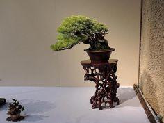 JPB:Bonsai Collection5 | Shows and exhibitions - 2013 - Bonsai Empire
