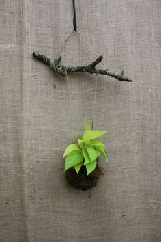 Simple tutorial on how to make your own string garden aka Kokedama.  Click above & turn to page 28.