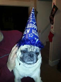 Sarge celebrates the new year with mixed feelings