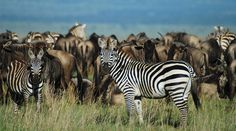 Best of East Africa Wildlife Safari