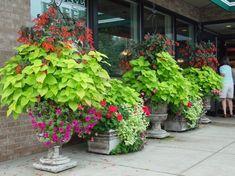 Gartenmeister fuchsia (upright), Lime Green Coleus, Red Geraniums, Magenta Petunias = Deborah Silver @ Detroit Garden Works