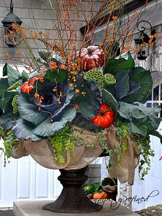 Fall Urn Planter by Serendipity Refined. Love the cabbage for bulk colour and structure. Fall Urn Planter by Serendipity Refined. Love the cabbage for bulk colour and structure.