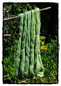 Fra årstid til årstid: Lupin dye. From flowers.