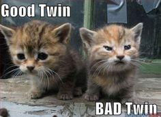 """""""Bon jumeau, mauvais jumeau."""""""