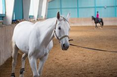 Each time you school, you have a chance to improve your horse's way of going.