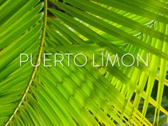 Puerto Limon  #PanamaCanal #Panama #Cruise #TravelIdeas #TravelInspiration #Cruising #Vacation #Travel