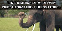 Elephants Are Just So Intelligent