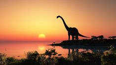 Researchers have found the Holy Grail of African Dinosaurs in the Sahara Desert. Experts have uncovered a massive new species of a titanosaur which roamed across the Sahara more than 80 million years ago, revealing a long-lost link between Africa and Europe, during the so-called end of the Dinosaur Era. The skeleton is the most complete plant-eating Cretaceous Period dinosaur ever found on the continent and has helped reveal the ancestral link between Africa and Europe during the end of the…