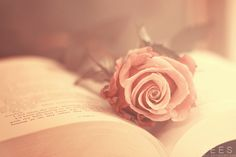 """""""A soft beginning"""" By Essa Al Mazroee"""