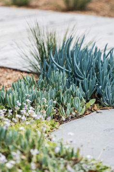 How To Use Succulent Landscape Design For Your Home Succulent Landscaping, Backyard Landscaping, Landscaping Ideas, Backyard Ideas, Low Maintenance Garden Design, Australian Native Garden, Coastal Gardens, Tropical Gardens, Garden Drawing