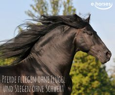 Was für ein eleganter Friese *-* Andalusian Horse, Friesian Horse, Thoroughbred, Equine Quotes, Horse Quotes, Riding Quotes, Black Stallion, Free Black, Nature Images