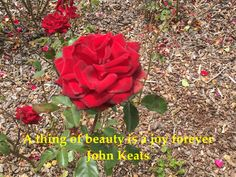 A thing of beauty is a joy forever John Keats John Keats, Joy, Words, Inspiration, Beauty, Biblical Inspiration, Cosmetology, Being Happy, Inhalation