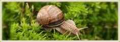 Snail farm VAS Escargots - Breeding and cultivation of snails