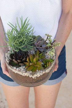 Learn how to make your own DIY Succulent Garden!