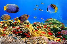 Resultado de imagen para fondo marino real