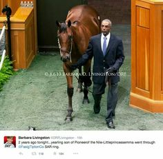 American Pharaoh 2 years ago!!! At the yearling sell!!