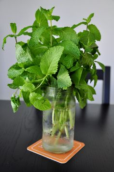 to Preserve Fresh Mint & More Tips for Herbs How To Preserve Fresh Mint. Both ways have worked well for me. It's weird how different mint and basil are to store Fresco, Preserve Fresh Herbs, Mint Recipes, Recipes With Fresh Mint, Fresh Mint Leaves, Mint Leaves Recipe, Spices And Herbs, Growing Herbs, Growing Mint