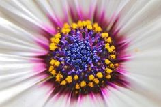 "Saatchi Art Artist Bea Kiss; Photography, ""Detail of white daisy - Limited Edition 1 of 50"" #art"