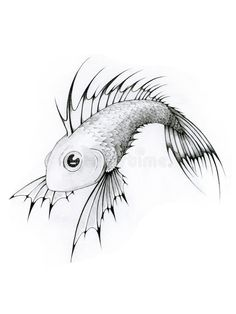 Black And White Tropical Fish Stock Illustration - Illustration of painting, drawing: 9766 Koi Fish Drawing, Fish Drawings, Aquarium Drawing, Marine Aquarium Fish, Drawn Fish, Fish Coloring Page, Engraving Illustration, Fish Stock, Stained Glass Crafts