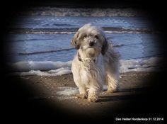 Den Helder Hondeloop 31.12.2014 - Albert Westra - Picasa Webalbums