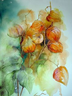 Chinese Lanterns are presently preparing for their orange coat. Watercolour Florals