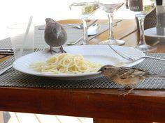 Kom eet saam! Spaghetti, Van, Ethnic Recipes, Food, Essen, Meals, Vans, Yemek, Noodle