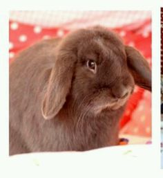 our cute bunny joey  ( Your Bunny is a cutie~)  : )