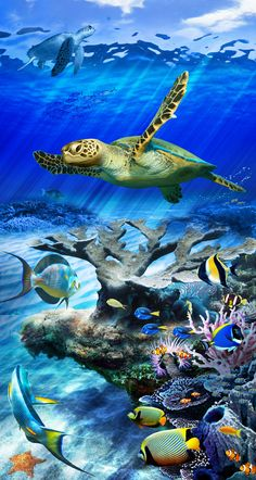 Turtle Reef, Static-Cling Film for Glass Door and Windows, by Wallpaper For Windows. Coming Soon!
