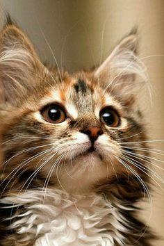 Looks like Zeke as a kitten. <3