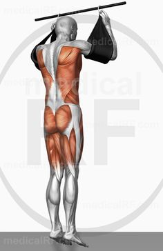 High-end medical image : The muscles involved in performing hanging leg raises. The agonist (active) and stabilizer muscles are highlighted. Pull Up Workout, Bigger Hips Workout, Hip Workout, Workout Plans, Hanging Leg Raises, Tight Hip Flexors, Core Stability, Psoas Muscle, Tight Hips
