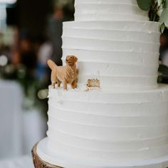 dog in wedding cake & dog in wedding ; dog in wedding ideas ; dog in wedding ceremony ; dog in wedding pictures ; dog in wedding cake ; dog in wedding how to incorporate ; dog in wedding dress ; dog in wedding ring bearer Themed Wedding Cakes, Unique Wedding Cakes, Unique Weddings, Gold Weddings, Wedding Cakes With Cupcakes, Wedding Cake White, Best Wedding Presents, Wedding Cake Two Tier, Funny Wedding Cakes