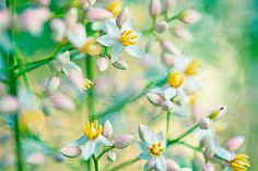 Spring Floral Photography   pink and green pastel by slightclutter