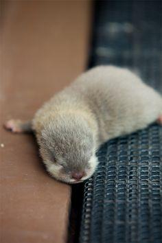 Otter pup <3