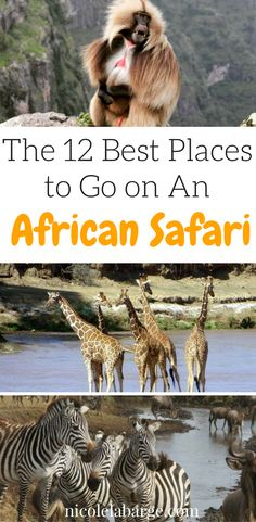 Planning a safari can be a bit overwhelming. Save this pin for all the essentials on where to go on #safari in #africa #bucketlist