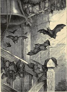British bats at home from Cassell's natural history, volume 1, 1876