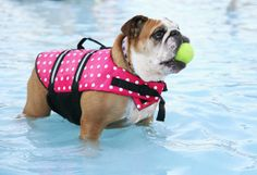 Doggy life vests can give an extra bit of confidence to a swimmer who needs it! petMD.com #SummerSafetyTips