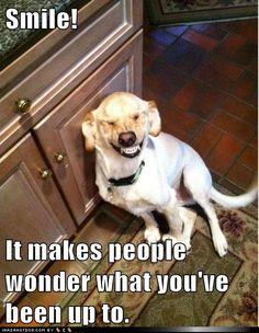 Dog Smile! Children's Dentists of Worcester - childrensdentistsofworcester.com
