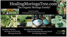 Healing Moringa Tree (Black Friday Sale) 20% off Entire Site  Thur-Sunday Code: BlackFriday