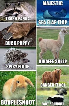 Animal names for Brace yourselves! 23 Hilarious Animal Memes So Cute They'll Make You LOL Other names for animals Need a Laugh? These Animal Memes Should Do the Trick! Funny Doggo Memes That Will Get Your Tail Wagging Top 40 Funny animal pi. Funny Animal Names, Cute Animal Memes, Funny Animal Quotes, Animal Jokes, Funny Animal Pictures, Cute Funny Animals, Funny Cute, Funny Photos, Pictures Of Animals