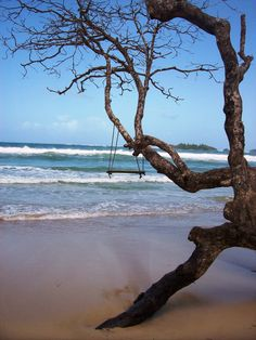 Took this pic at Red Frog Beach in Bocas del Toro, Panama. Want to go back!