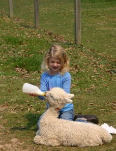 Baby Alpaca being fed by bottle