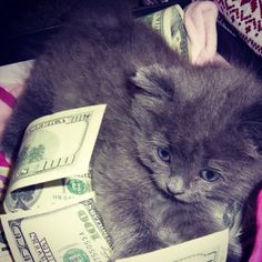 From the article quot 33 cats that make it rain cash money quot on dormstormer