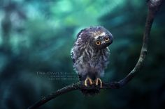 21 of the Most Beautiful Wildlife Photos on 500px