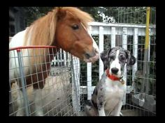 Mini-Horse And Pup Are BFF's And It's SO STINKIN' CUTE! | The Animal Rescue Site Blog